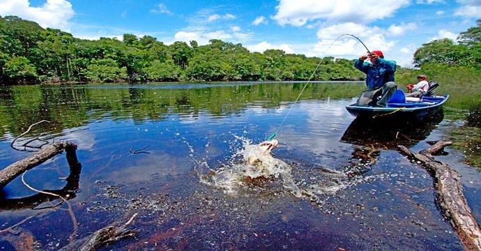 Apesar de a produção de oxigênio ser originada na sua maior parte pelos oceanos, a floresta amazônica ainda assim contribui com uma porcentagem significativa de oxigênio, cerca de 1%, para que o planeta Terra esteja em harmonia. Porém, o que mais ela contribui é para a retirada de CO2 da atmosfera mantendo a estabilidade ambiental do planeta. Maior parte da região Amazônica está localizada dentro do território brasileiro, no estado do Amazonas. Um dos grandes destaques da região têm sido os métodos de sustentabilidade para a manutenção da região nos mercados que envolvem o Ecoturismo e o Turismo Náutico. A Pescaria Esportiva tem sido um dos destinos principais dentro desses segmentos. A pesca esportiva está intrinsecamente associada aos impactos ecológicos e sociais da região em que é realizada. Quando falamos em pesca, às vezes esquecemos-nos da natureza ao redor e que é preciso preservá-la. Essa atividade é uma importante ferramenta para o desenvolvimento do turismo sustentável da região.