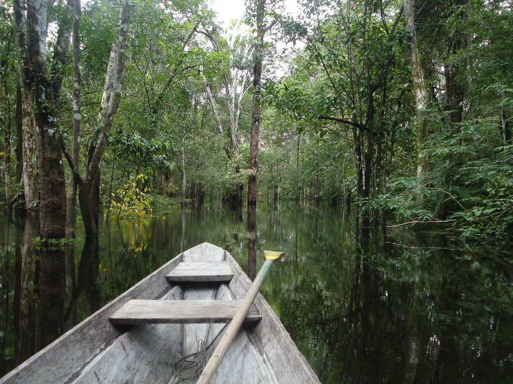 The Janauari Lake Ecological Park is a cultural and natural heritage that is under the custody of the state and municipal powers (Iranduba / Am), to preserve the assets present in the area and orderly tourism promotion.