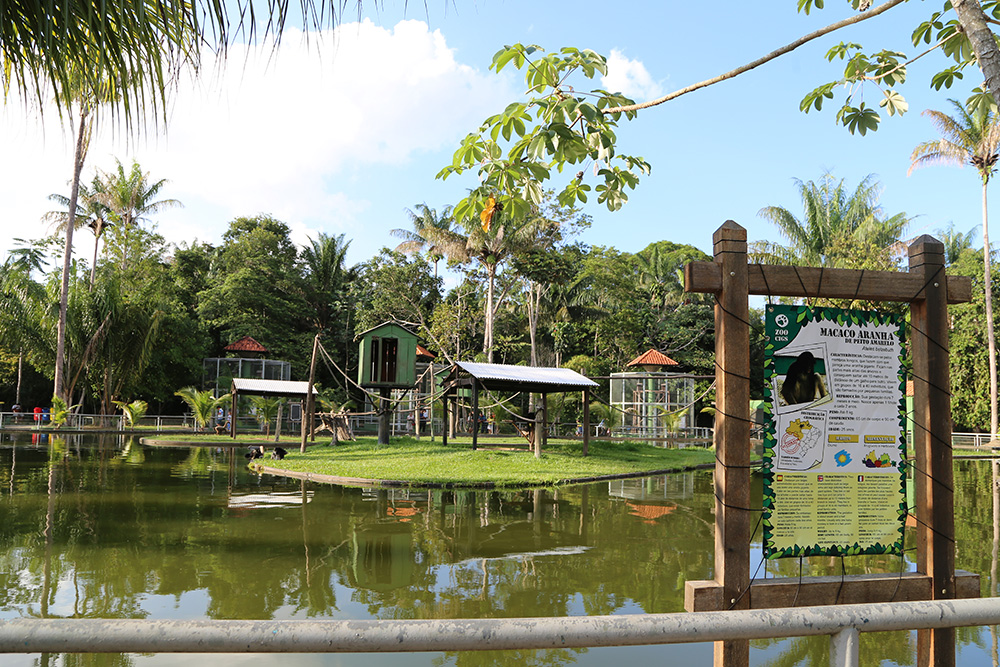 The CIGS Zoo is a highlight in the Amazon for housing more than 200 animals of the Amazon fauna for public visitation. There it is possible to observe a variety of birds, monkeys, black panther, and the most famous of all: the jaguar. There is also an aquarium where it is possible to see some fish of the region.