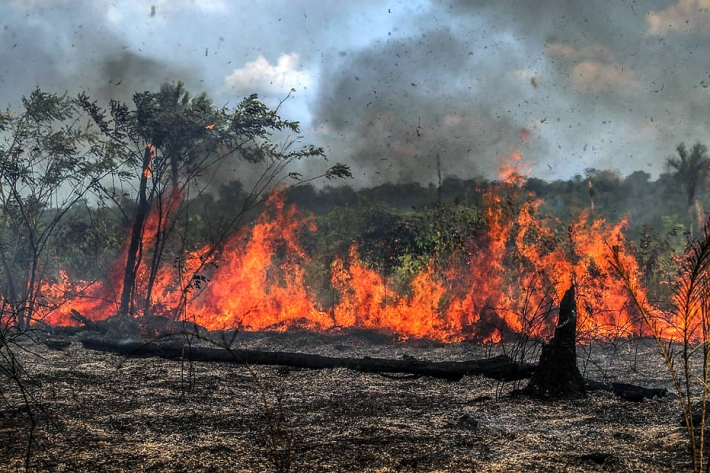 Amazonian Flora: When this type of area is preserved, the forest acts as a factor in combating the advance of a catastrophic climate crisis. On the contrary, when the area suffers from deforestation and burning, they end up contributing negatively to the problem.