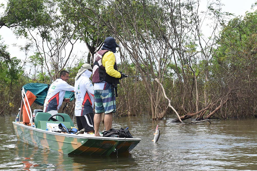 The state of Amazonas is the most sought after for sport fishing. The state is the main one chosen for reasons of abundant fresh water.