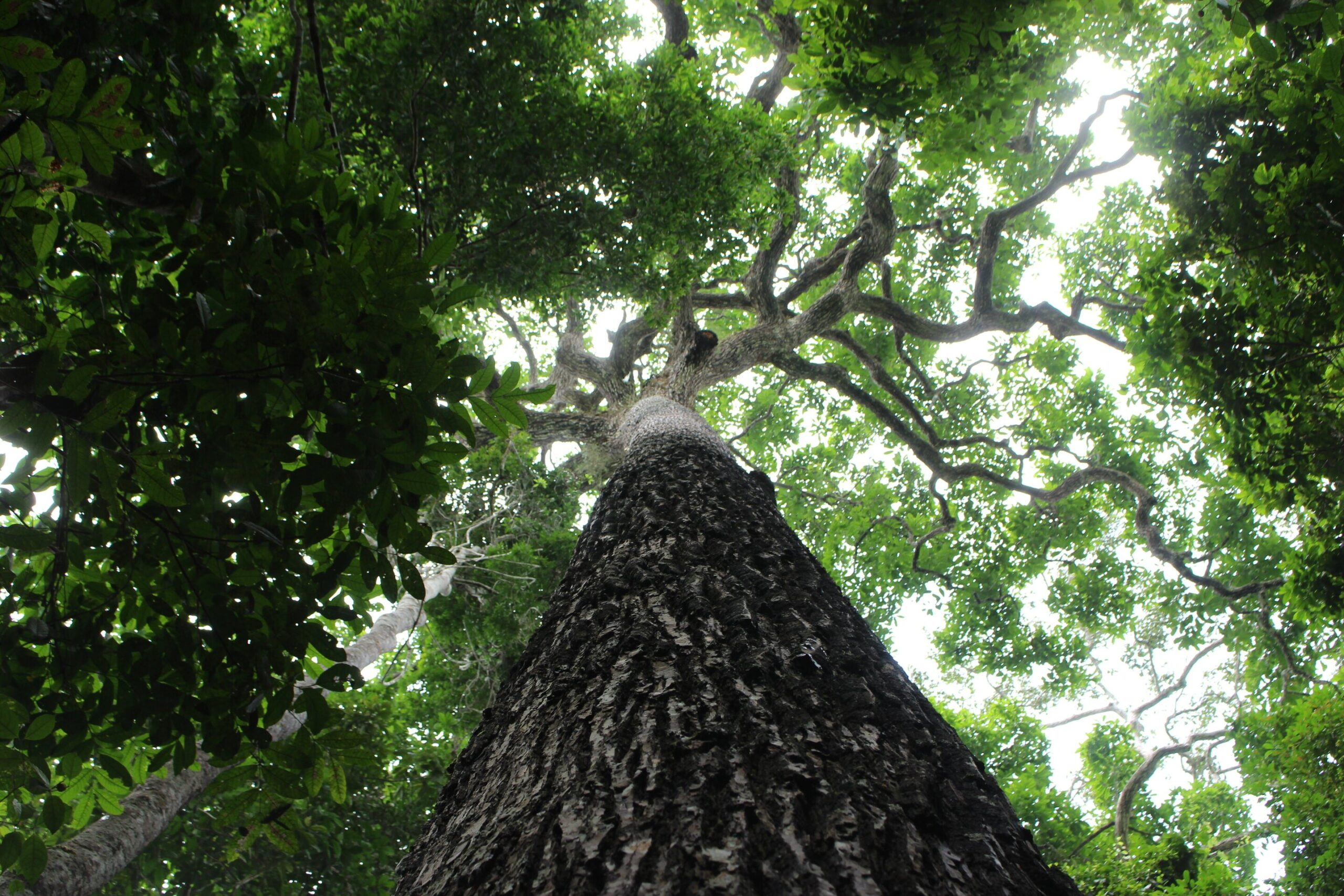 Day of the Tree: The motivation of the tree day goes beyond the anticipation of the beginning of spring. This date arises as a need to take the population about the importance of trees and plants, so that there is life in the world.