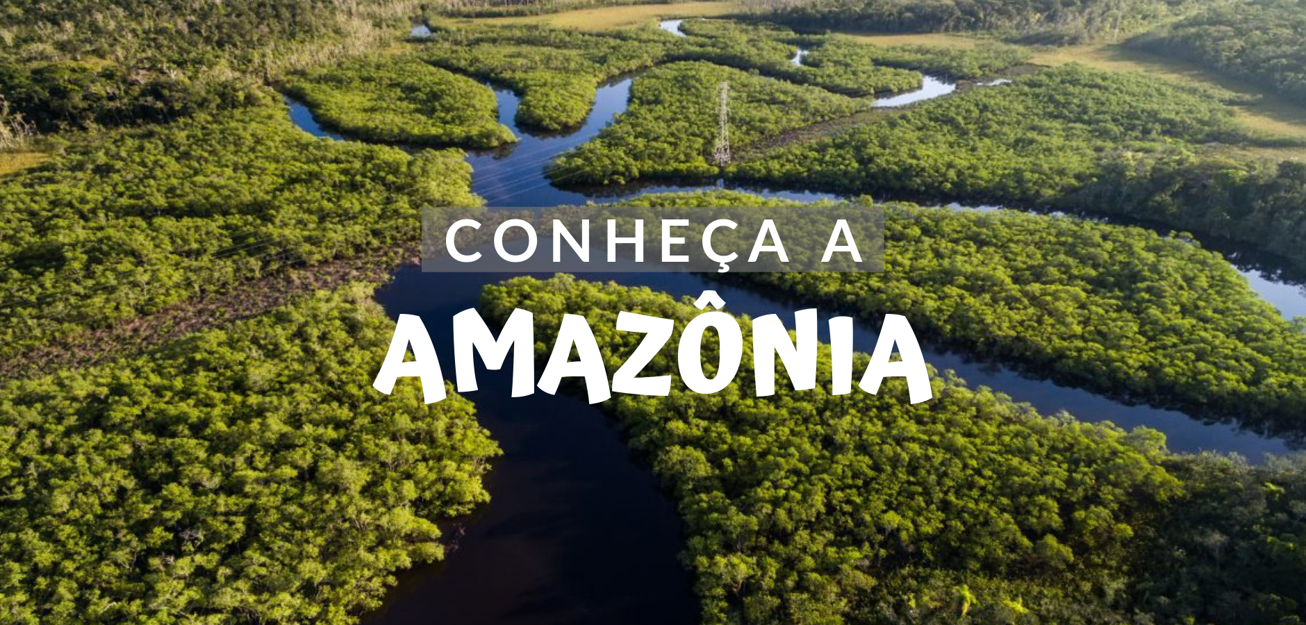 The Amazon is a region that causes a lot of impact on everyone who visits it. It is a charming place, with a variety of things to do and many possibilities for tours. That's exactly why this place keeps many stories about its forests, people and its culture, besides many other things.