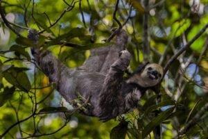 A floresta amazônica se faz importante no contexto ambiental, pois ela é uma floresta tropical que contribui para o equilíbrio ambiental da terra, além de também ser fonte de biodiversidade e possuir cerca de 40 mil espécies de plantas diferentes, 400 mamíferos e 1.300 aves.