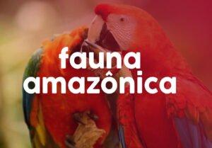 A Amazônia é uma das regiões mais ricas, bonitas e desconhecidas do mundo. E apesar de ser intensamente desmatada é, ainda, um dos biomas mais preservados que existem.