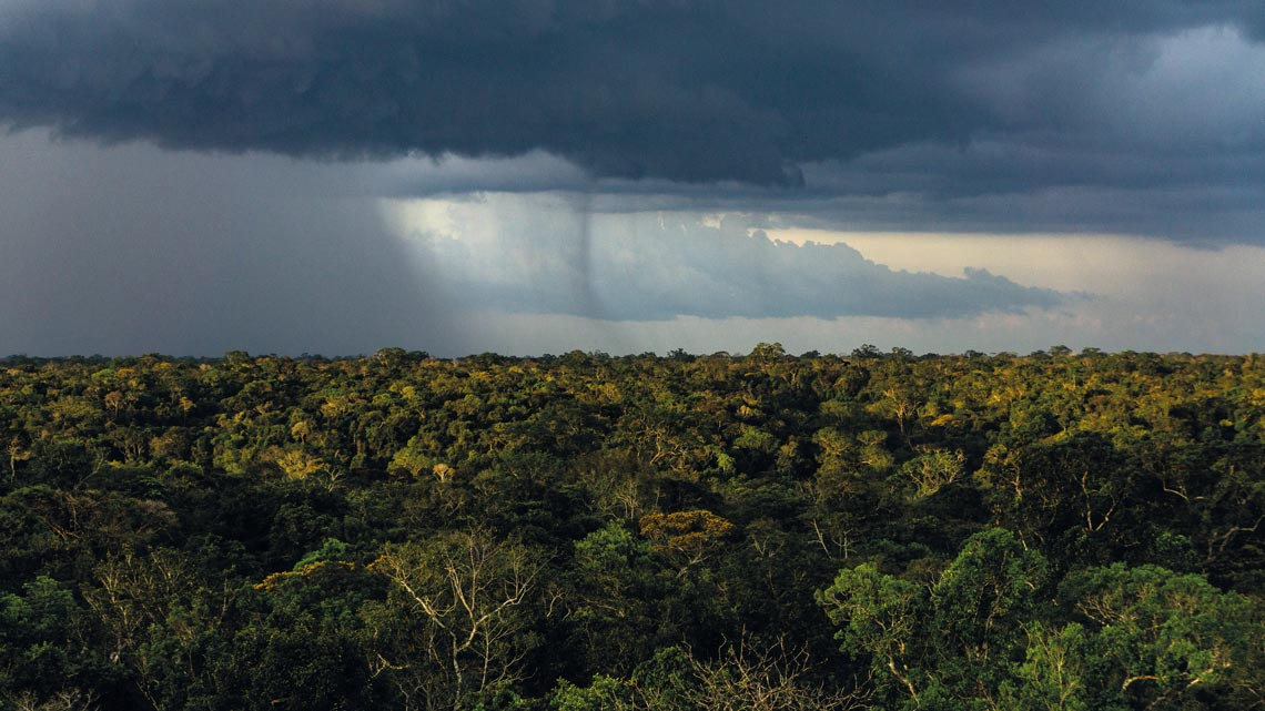The rainy season in the Amazon extends over a short period from December to May, and with great intensity. During this period it is indicated to explore the destination on board a boat or a motorboat. In addition, it is possible to take canoe trips through the igapós and observe the animals that live in the trees.