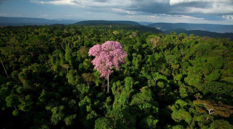 Além de estocar carbono, as florestas regulam o clima. As florestas são a casa de grande parte da biodiversidade do planeta, sendo muitas delas ainda desconhecidas para a ciência.